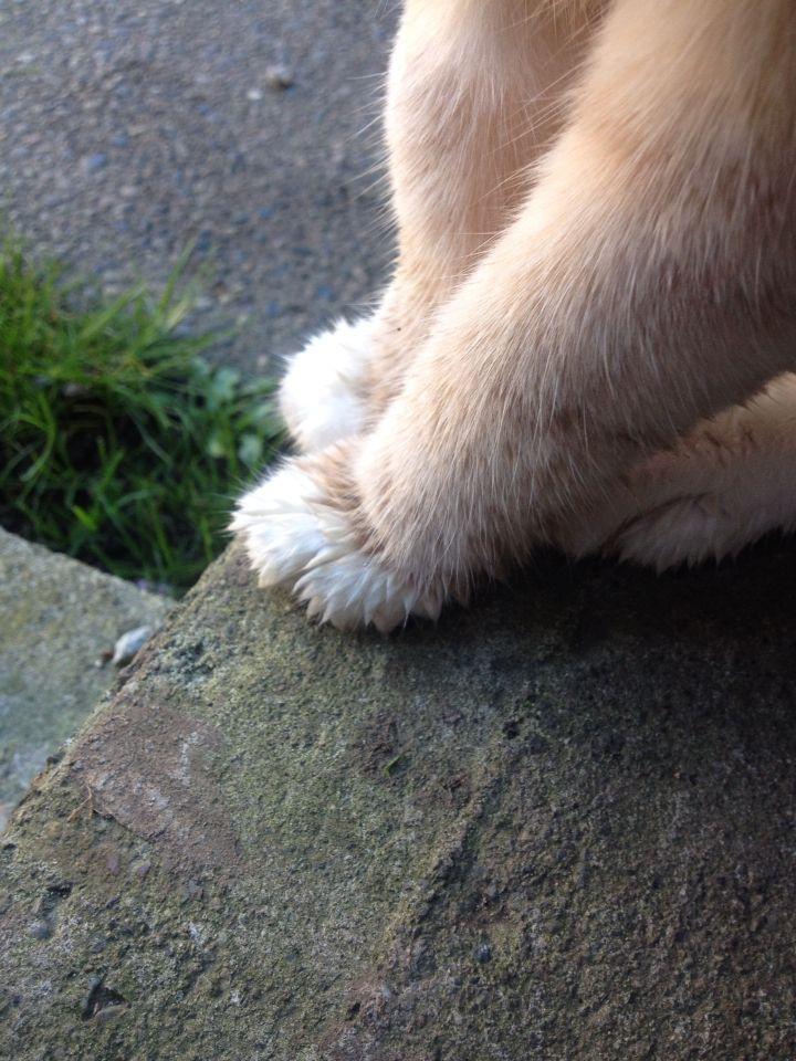 Wet paws!