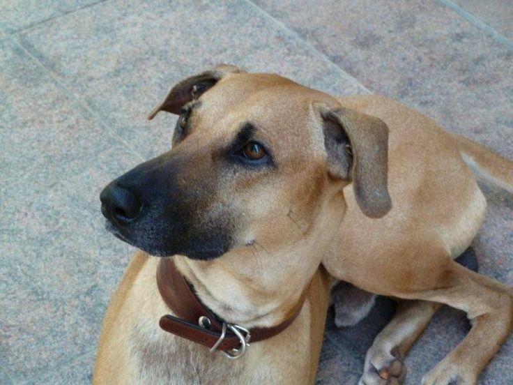 Kigbessay on my favourite pet animal in hindi