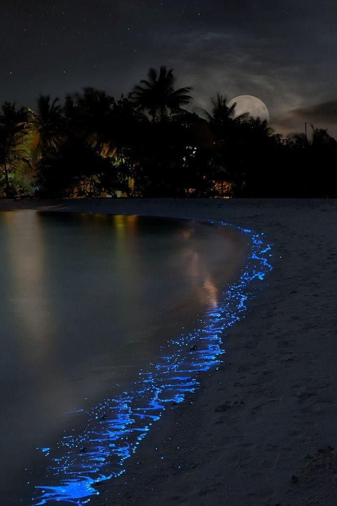 Plankton Shining, Night sea, by Olga Scheglova, on 500px.(Trimming)