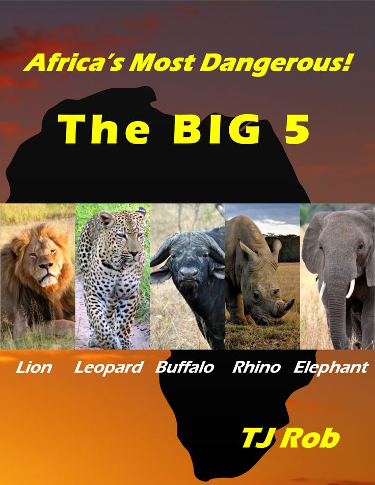 The Big 5 were thought to be the most dangerous animal by hunters in all of Africa.  All 5 are formidable if provoked. Although we shoot them only with cameras today, the name has stuck. They are all incredible animals in their own way. #lions #leopards #rhino #elephant #capebuffalo #kidsbooks