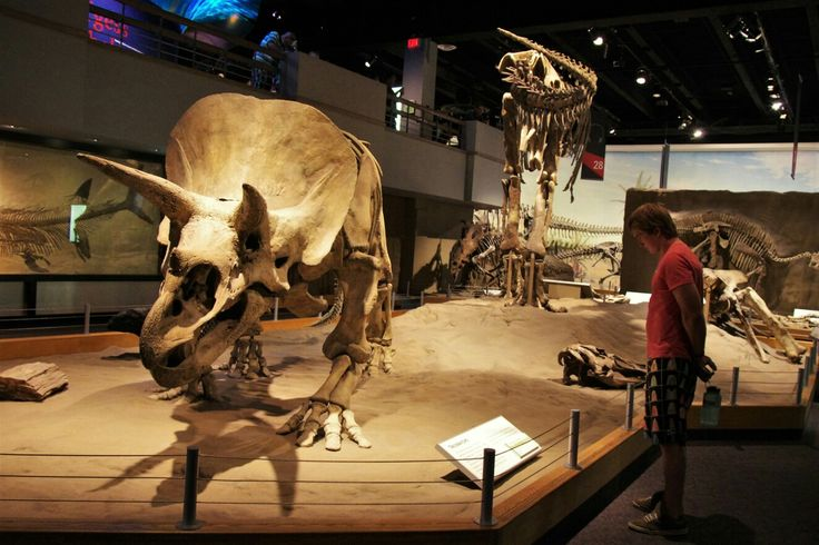 Real dinosaur fossils and casts Royal Tyrrell Museum in Drumheller, Alberta, Canada. A must to see if you pass by.