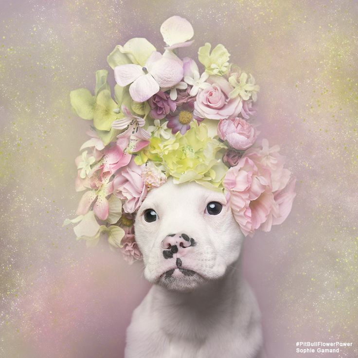 """""""Pit Bull Flower Power,"""" the animal adoption project that's stolen our hearts"""