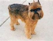 The doggy i want