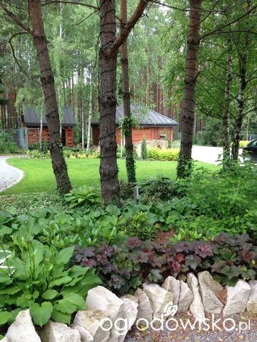 Roztoczańskie klimaty - strona 503 - Forum ogrodnicze - Ogrodowisko