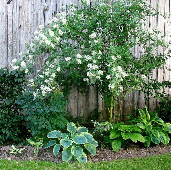les 134 meilleures images du tableau jardin d 39 ombre sur pinterest am nagement jardin fleuri. Black Bedroom Furniture Sets. Home Design Ideas