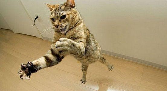 Gatti Ninja: 30 foto | BAU BOYS - La community per chi ama gli animali