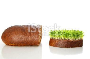Organic Bread Concept Royalty Free Stock Photo