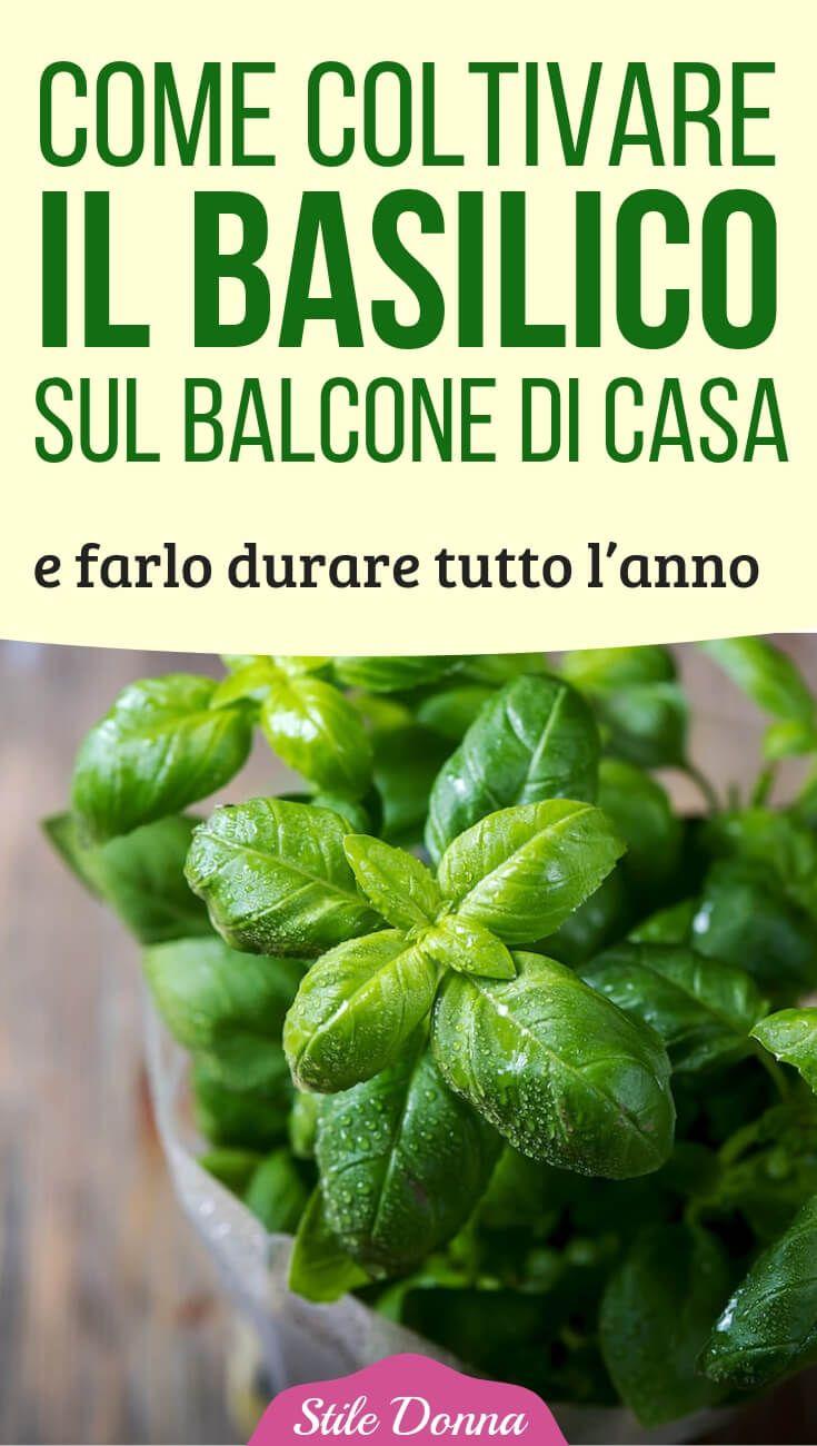 Come Coltivare Pomodori Sul Balcone come coltivare il basilico sul balcone di casa e farlo