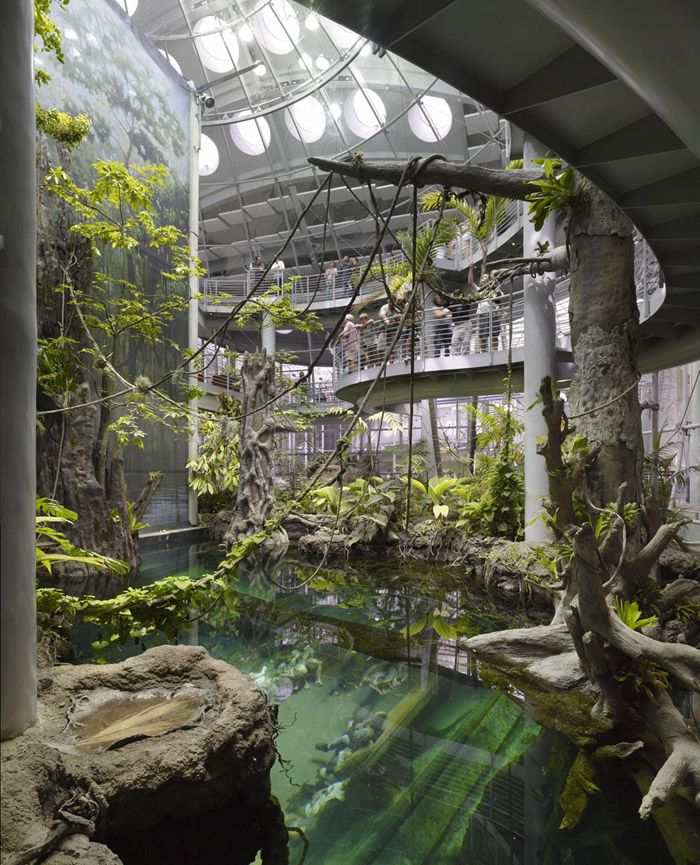 California Academy of Science. We went here and it was terrific.This is a genuine slice of Amazon jungle right down to the white crococodile you can just see at the bottom