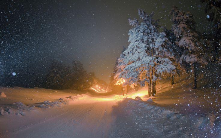 Картинки по запросу новый год в лесу