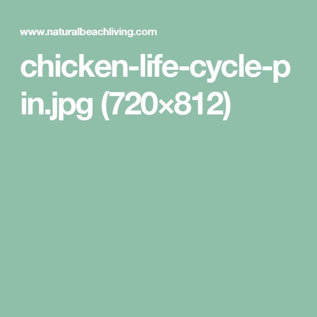 chicken-life-cycle-pin.jpg (720×812)