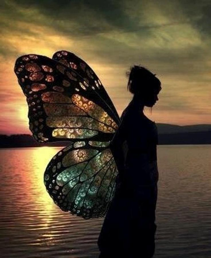 : Beautiful Butterflies, Angel, Fairies Wings, A Cinderella Stories, Silhouette, Fashion Art, Butterflies Wings, Fairies Dolls, Stained Glasses