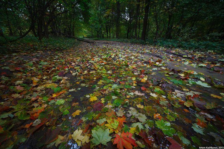 Осень в старом парке (серия) - Красивые осенние фотографии