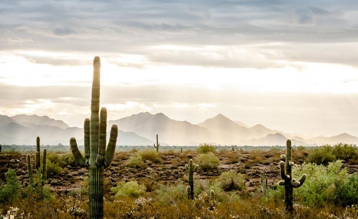 A beautiful cloudy morning in Cave Creek AZ / Sonoran Desert [1600981][OC] #reddit