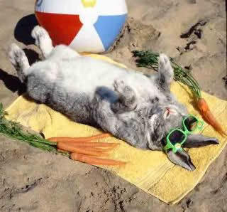 easter bunny at the beach - Google Search
