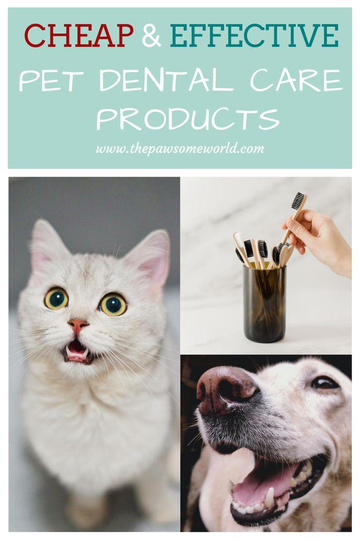 Best catdog dental care products dog dental dog dental