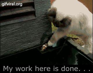 Gato ambientalista famoso