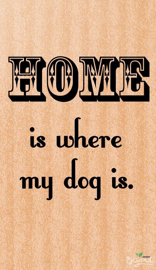 A house is not a home without the love of a four-legged companion. #thinkbeyond  #commissioned #cutedogquote #dog