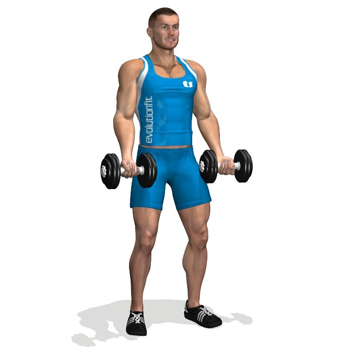 STANDING DUMBBELL BICEP CURL INVOLVED MUSCLES DURING THE TRAINING BICEPS