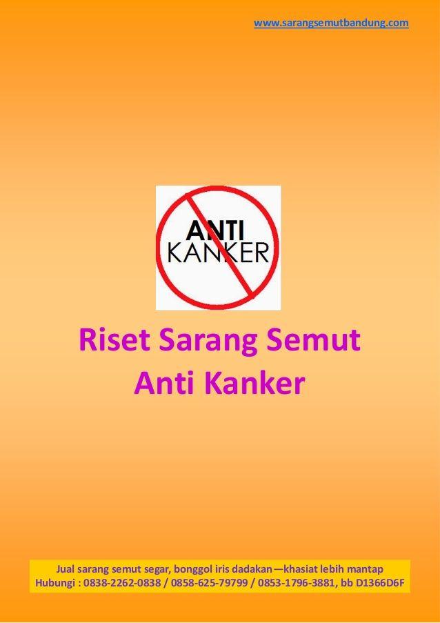Riset Sarang Semut Anti Kanker Jual sarang semut segar, bonggol iris dadakan—khasiat lebih mantap Hubungi : 0838-2262-0838...