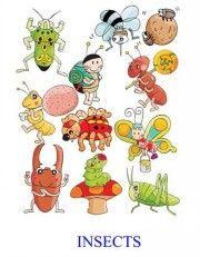 http://izbenka.org/igrovaya/nedelki-angliyskogo/tematicheskaya-nedelka-insects-bukashki/ ПРИМЕР ТЕМАТИЧЕСКОЙ НЕДЕЛЬКИ с МАТЕРИАЛАМИ ДЛЯ СКАЧИВАНИЯ (Автор Ольга Смыкова, izbenka.org)