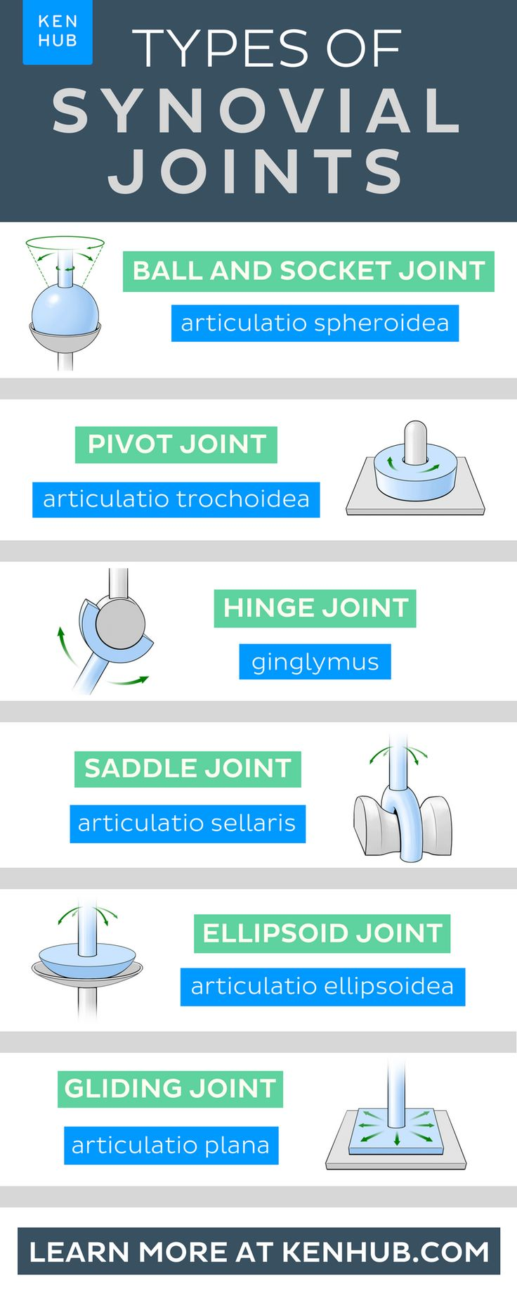 Learn about the types of synovial joints at Kenhub! Click the image to find out more. #anatomy #humanbody #medical #joint