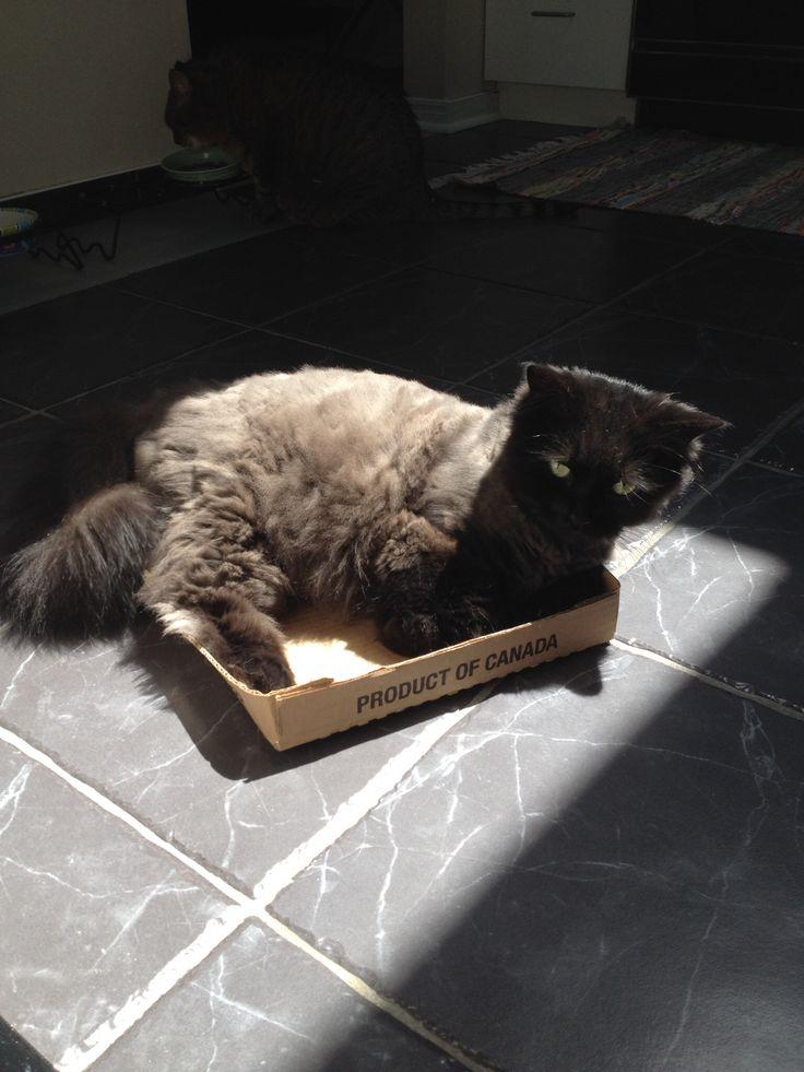 Georgie sunbathing