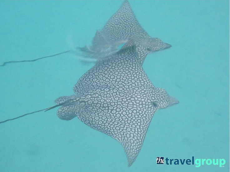 Tahiti November 2012
