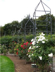 Rose Growing & Care / Rose Information / Own-Root Roses / Heirloom Roses - Heirloom Roses