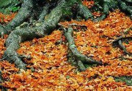 Comment tuer les racines des arbres Naturellement