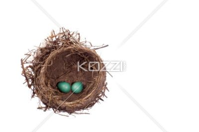 little green eggs in a nest - A pair of small green eggs inside a bird's nest.: Small Green, Stockings Photography, Birds Nests, Nests Stockings, Pretty Natural, Eggs Inside, Bird Nests, Green Eggs, Wonder Natural