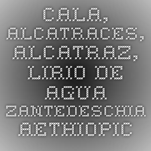 Cala, Alcatraces, Alcatraz, Lirio de agua - Zantedeschia aethiopica