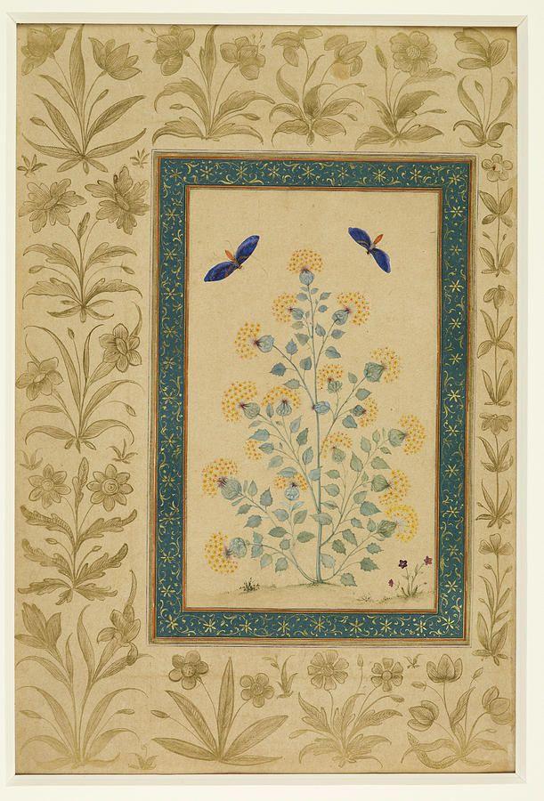 Plant With Butterflies, Dara Shikoh Album, ca. 1640-1640.