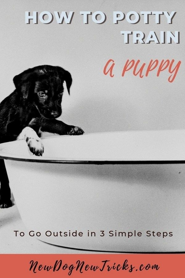 How To Potty Train A Puppy To Go Outside New Dog New Tricks Puppy Training Training Your Puppy Dog Training