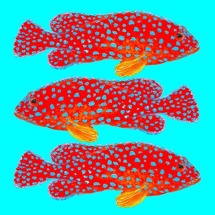 Strawberry Grouper Fish  #fishing #coastaldecor #bathroomwalldecor