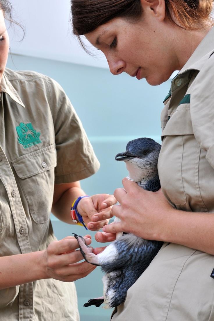 10++ Animal shelter melbourne fl images