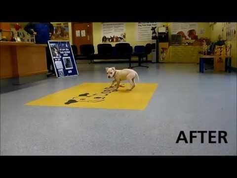 Dogs Trust Leeds: Wonky (Juliette) Update - Before & After Footage