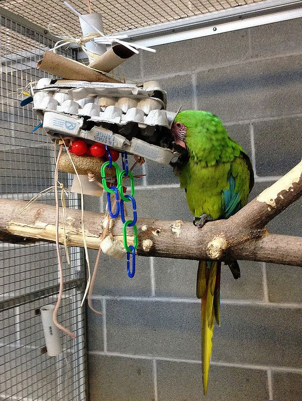 Bird Enrichment Toys : Best images about enrichment on pinterest parakeet