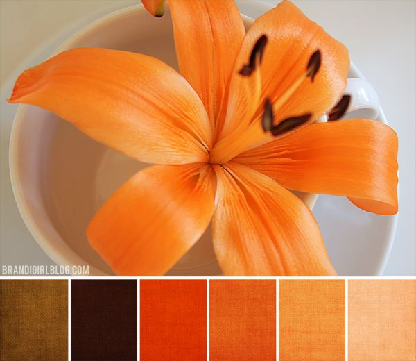 121 Best Images About Front Doors On Pinterest Red Front