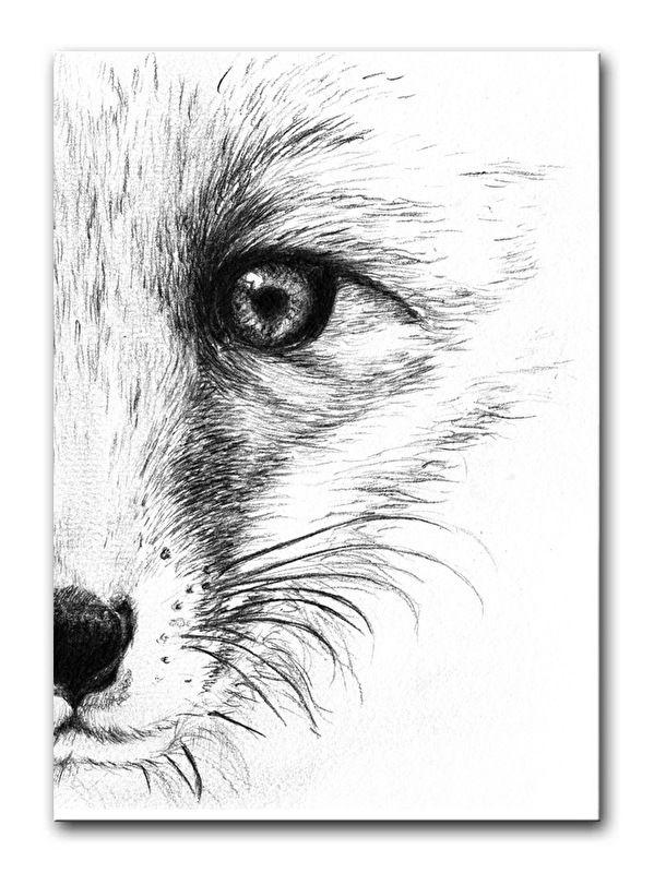 Ansichtkaart Vos. Een handgetekend ontwerp van een vos, gedrukt op sulfaat karton.  Ook verkrijgbaar als poster in A4 formaat