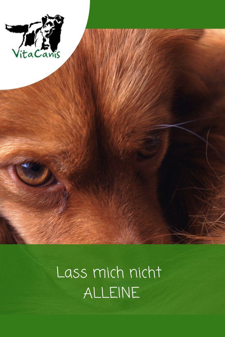Lass Mich Nicht Allein Trennungsstress Teil 1 Hund Bellt Hunde Erziehen Hundchen Training