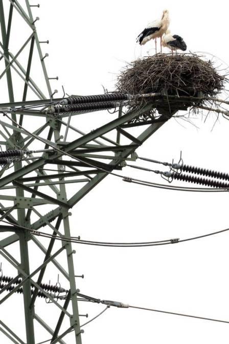 Ninho de cegonhas em torre de transmissão de energia na Alemanha