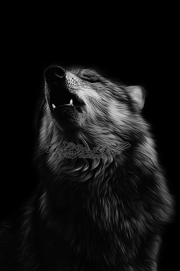 .:Black Howl:. by WhiteSpiritWolf