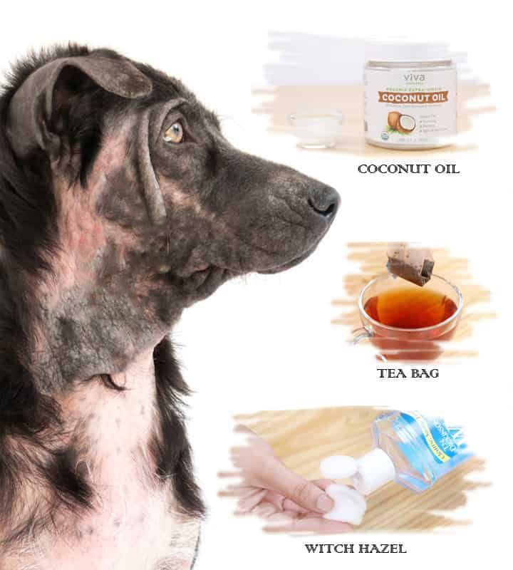 Home Remedies For Hot Spots In Dogs Dog Hot Spots Remedy Dog
