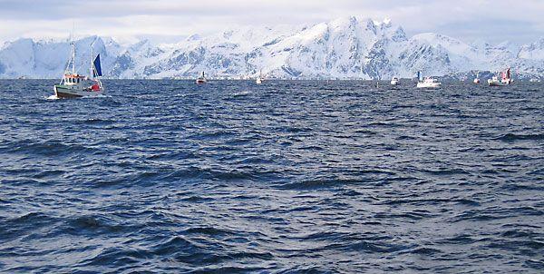 Pequenos barcos utilizados na pesca do bacalhau do Atlântico, ao largo da ilha Flakstad, no arquipélago de Lofoten, condado de Nordland, Noruega.  Fotografia: Arnejohs.