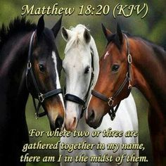 Bible verses and animal pictures - Google Search