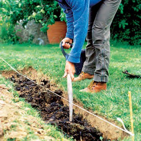 Plant en ny hekk