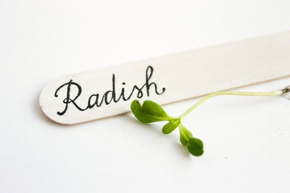 Plant marker Radish plant Calligraphy wooden herb marker by MapleApple, $1.99