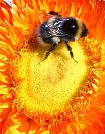 Best flowers for bees