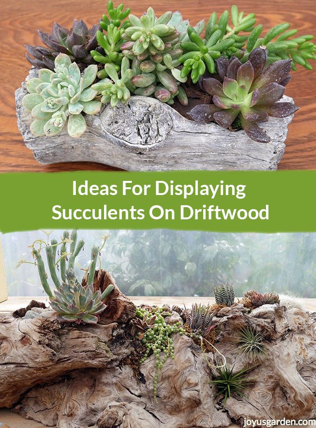 25 Unique Indoor Succulents Ideas On Pinterest Indoor
